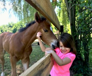 Horse nuzzles a little girl at Pine Ridge Dude Ranch