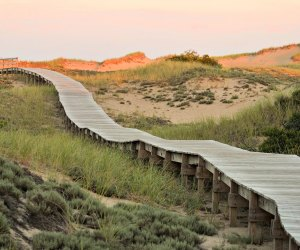 Take a walk  along the pretty Plum Island boardwalk. Photo by Christene S. /Flickr