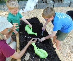 Lend a hand, plant a potato! Photo courtesy of Discovery Woods Garden