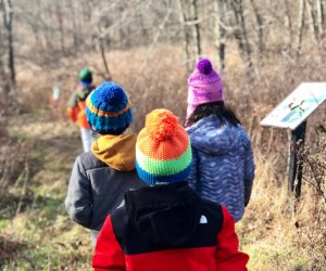 Preschool nature walks at the Leon Levy Preserve celebrate the harvest season as Thanksgiving approaches. Photo courtesy of the Lewisboro Land Trust