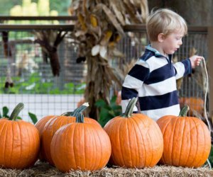 Longwood's Pumpkin Playground is back this year! Photo courtesy of the  Longwood Garden