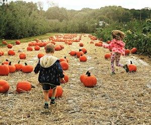 Kids running through a pumpkin patch on a fall day trip near NYC