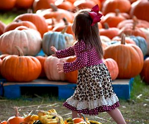 Find the best pumpkin patches near Atlanta with our guide to the best things to do this fall near Atlanta with kids.