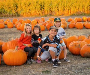 Pumpkin patches are open!
