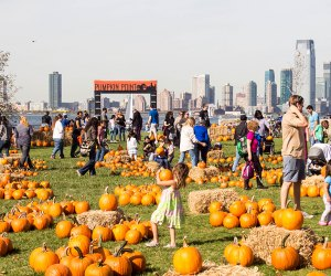One of NYC's only pumpkin patches (with a great view) returns to Governors Island.