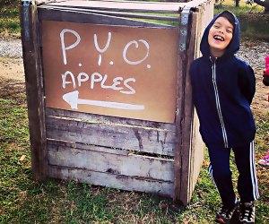 Picj you own apples at a farm near NYC. Photo by Matt Nighswander