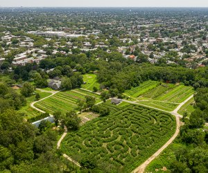 The Amazing Maize Maze is located at the Queens County Farm Museum