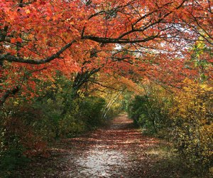 Quogue Wildlife Refuge trails draped with fall colors.