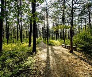 Take a walk through the pristine and remote Quogue Wildlife Refuge. Photo courtesy of the refuge