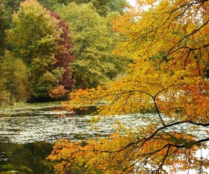 Rockefeller State Park Preserve offers a rainbow of fall foliage to take in during the autumn.