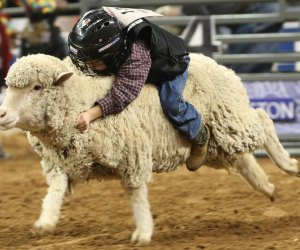 Mutton Bustin' is always a crowd favorite. Photo courtesy of Houston Livestock Show and Rodeo.