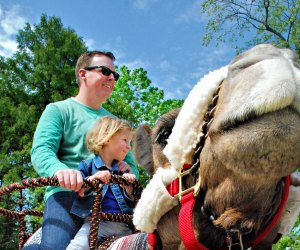 Camel Ride. Photo courtesy of Roger Williams Park Zoo