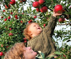 Rogers has two apple-filled orchards in Southington. Photo courtesy of Rogers Orchard