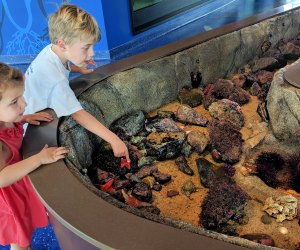 Kids can get up close to marine life. Photo courtesy of Roundhouse Aquarium