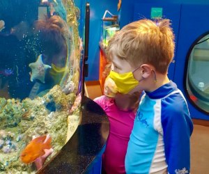 FREE Things Kids Can Do in LA: Roundhouse Aquarium