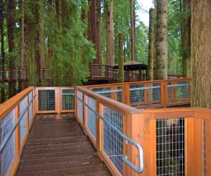 Redwood Sky Walk at Sequoia Park Zoo: Safety first
