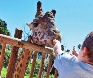Head up the coast to the charming Santa Barbara Zoo. Photo courtesy of Santa Barbara Tourism