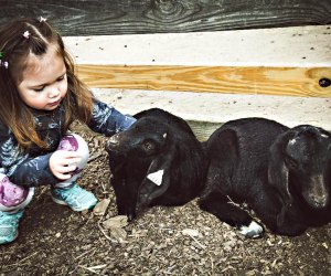 Enjoy quality time with the animals at the Suffolk County Farm and Education Center.