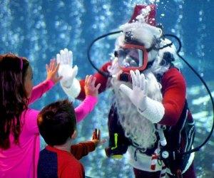 Scuba Santa returns to Adventure Aquarium.