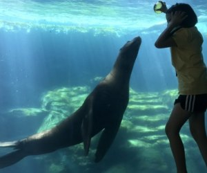 35+ Fall Activities near Los Angeles for Kids: Aquarium of the Pacific