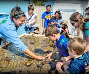 Meet a few sea creatures at the Sea Lab. Photo courtesy of Redondo Beach Chamber of Commerce & Visitors Bureau