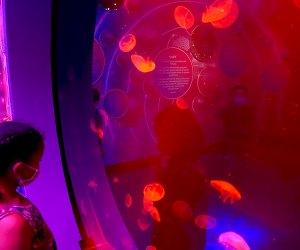 Jellies 54 at Sea Life Aquarium
