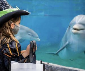 Trick-or-treat among the dolphins at SeaWorld Spooktacular. Photo courtesy of SeaWorld