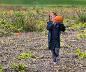 Pick the perfect pumpkin at Shady Brook Farm. Photo by Bill Johnson courtesy of Visit Philadelphia