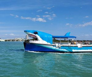 a shark tour boat takes passengers to see dolphins