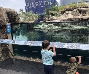 The New York Aquarium on Coney Island