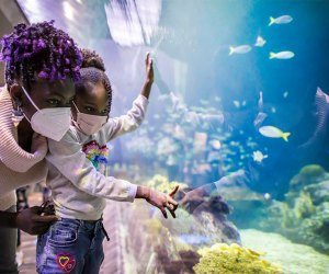The Best Zoos and Aquariums for Chicago Kids: Shedd Aquarium