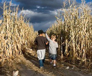 Get lost with a friend in the corn maze at Siegel's Cottonwood Farm.