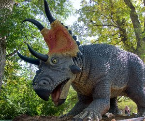 Get up close to larger-than-life dinosaurs at Six Flags Xpedition Dino.