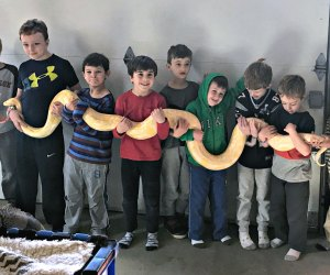 Let the New England Reptile Show prove snakes can make fun party animals! Photo by author