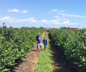 The berries can be reached by even the littlest hands at Southern Hill Farms. Photo by Charlotte Blanton