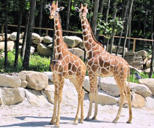 See more than 800 animals at Southwick's Zoo. Photo courtesy the Massachusetts Office of Travel & Tourism