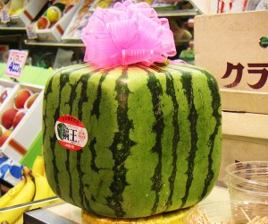 101 Fun Facts That Will Blow Your Kids' Minds: Square watermelons exist!