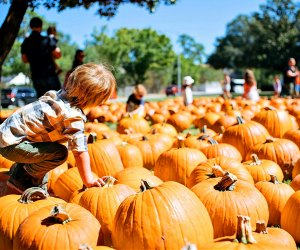 Stunning pumpkin patch at St. Luke's United Methodist Church. Photo courtesy the church