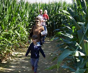 Challenge yourself in the 3-acre corn maze at Stakey's Pumpkin Farm.