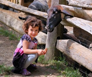 With a working farm, plenty of trails to explore, and hands-on programming, the Stamford Museum & Nature Center is a family-friendly wonderland. Photo courtesy of Stamford Museum & Nature Center
