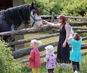 Get up close with farm animals. Photo courtesy of Stamford Museum & Nature Center