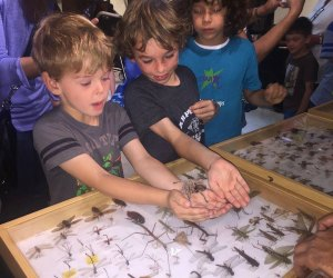 Get hands on with some creepy crawlers at the Enchanted Crawly Hallow's Eve. Photo courtesy of STAR Eco Station