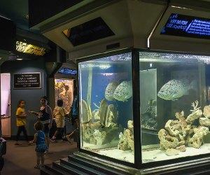 Peek into the aquarium at the Staten Island Zoo