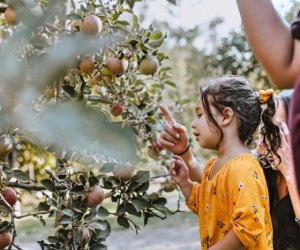 Apple Picking near Los Angeles: Stone Soup Farm