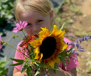 Surround yourself with beautiful sunflowers at this Stony Hill Farms festival. Photo courtesy of the farm