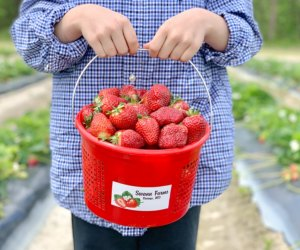 Kids can fill a bucket strawberry picking at the farm. Photo courtesy of Swann Farms