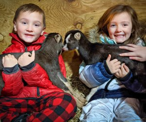 Make a playdate with the baby goats. Photo courtesy of Syman Says Farms