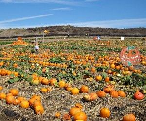 Photo courtesy of Tanaka Farms