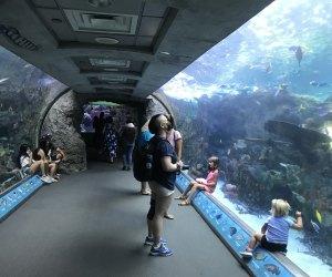 Aquarium of the Pacific tanks