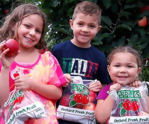Come to Terhune Orchards to pick your own apples! Photo courtesy of the orchard